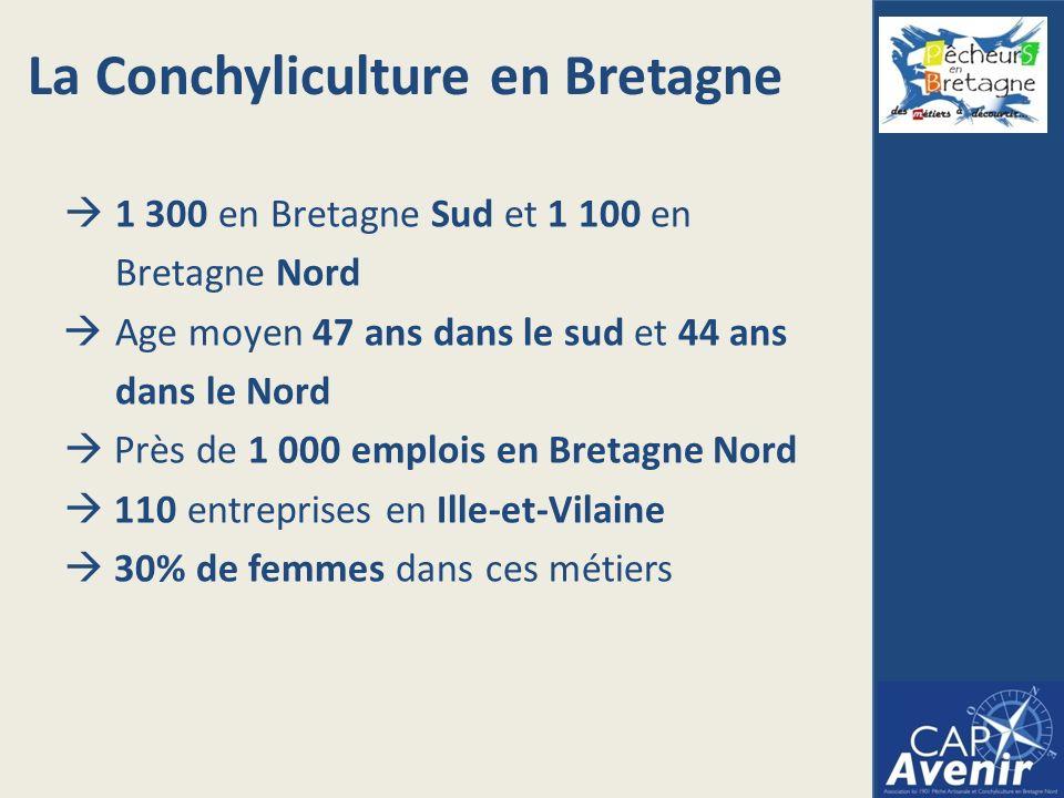 1 300 en Bretagne Sud et 1 100 en Bretagne Nord Age moyen 47 ans dans le sud et 44 ans dans le Nord Près de 1 000 emplois en Bretagne Nord 110 entreprises en Ille-et-Vilaine 30% de femmes dans ces métiers La Conchyliculture en Bretagne