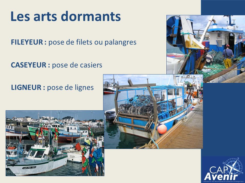 Les arts dormants FILEYEUR : pose de filets ou palangres CASEYEUR : pose de casiers LIGNEUR : pose de lignes