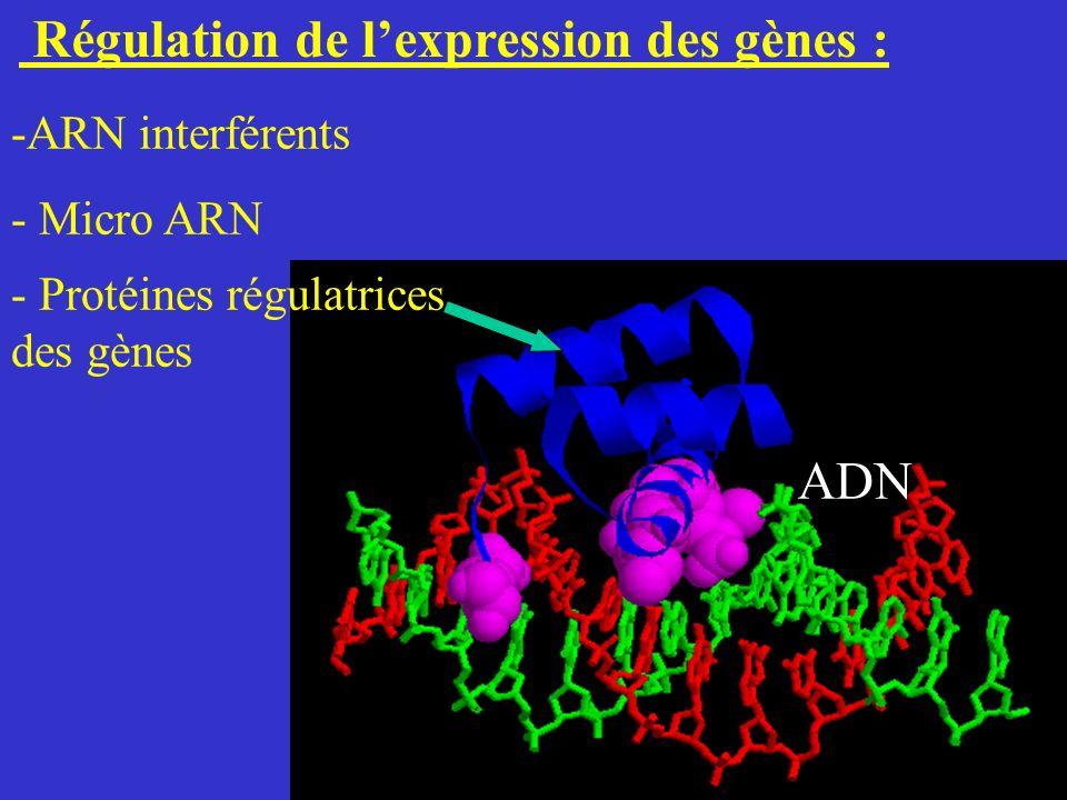 Régulation de lexpression des gènes : ADN - Protéines régulatrices des gènes -ARN interférents - Micro ARN