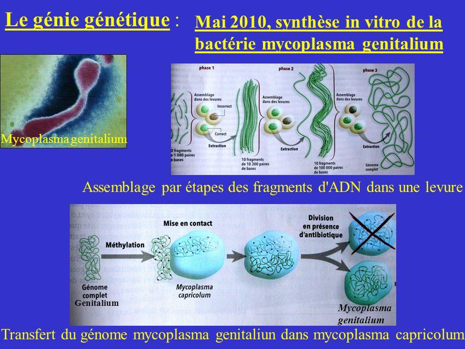 Le génie génétique : Mai 2010, synthèse in vitro de la bactérie mycoplasma genitalium Mycoplasma genitalium Assemblage par étapes des fragments d'ADN