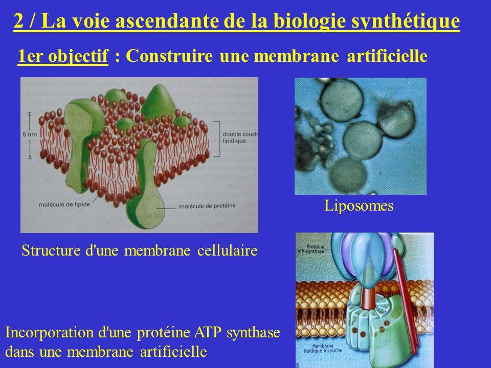 2 / La voie ascendante de la biologie synthétique 1er objectif : Construire une membrane artificielle Structure d'une membrane cellulaire Liposomes In