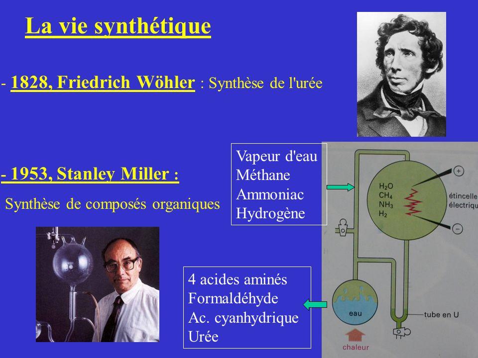 La vie synthétique - 1828, Friedrich Wöhler : Synthèse de l'urée - 1953, Stanley Miller : Synthèse de composés organiques Vapeur d'eau Méthane Ammonia
