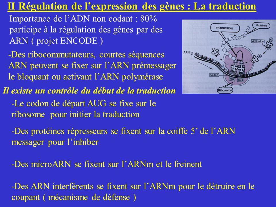 II Régulation de lexpression des gènes : La traduction -Des ribocommutateurs, courtes séquences ARN peuvent se fixer sur lARN prémessager le bloquant