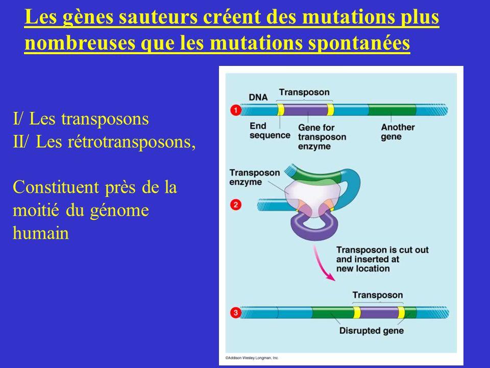 Les gènes sauteurs créent des mutations plus nombreuses que les mutations spontanées I/ Les transposons II/ Les rétrotransposons, Constituent près de