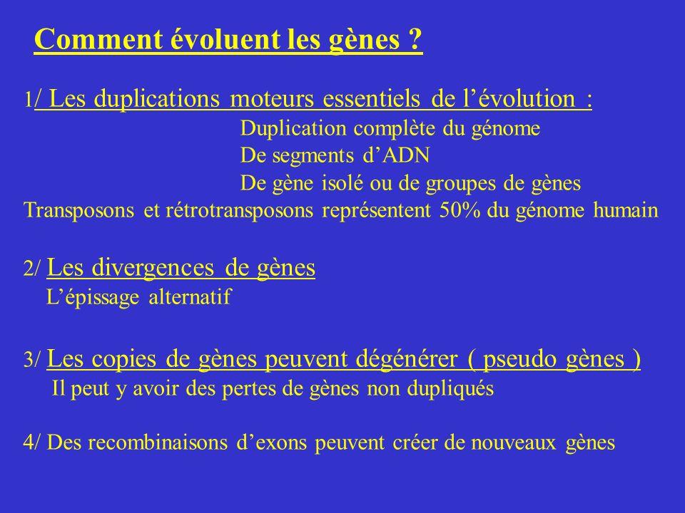 Comment évoluent les gènes ? 1 / Les duplications moteurs essentiels de lévolution : Duplication complète du génome De segments dADN De gène isolé ou