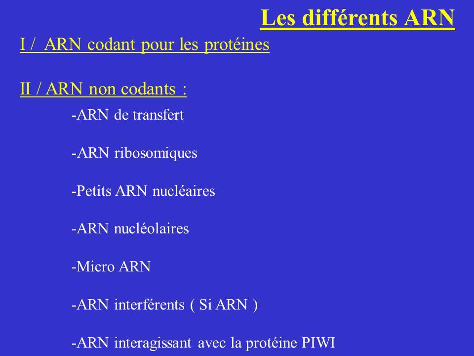 Les différents ARN I / ARN codant pour les protéines II / ARN non codants : -ARN de transfert -ARN ribosomiques -Petits ARN nucléaires -ARN nucléolair
