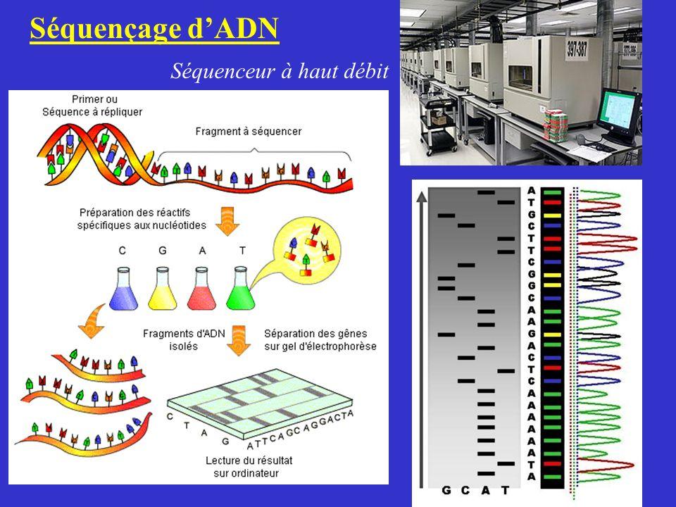 Séquençage dADN Séquenceur à haut débit