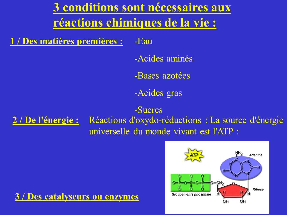 3 conditions sont nécessaires aux réactions chimiques de la vie : 1 / Des matières premières :-Eau -Acides aminés -Bases azotées -Acides gras -Sucres