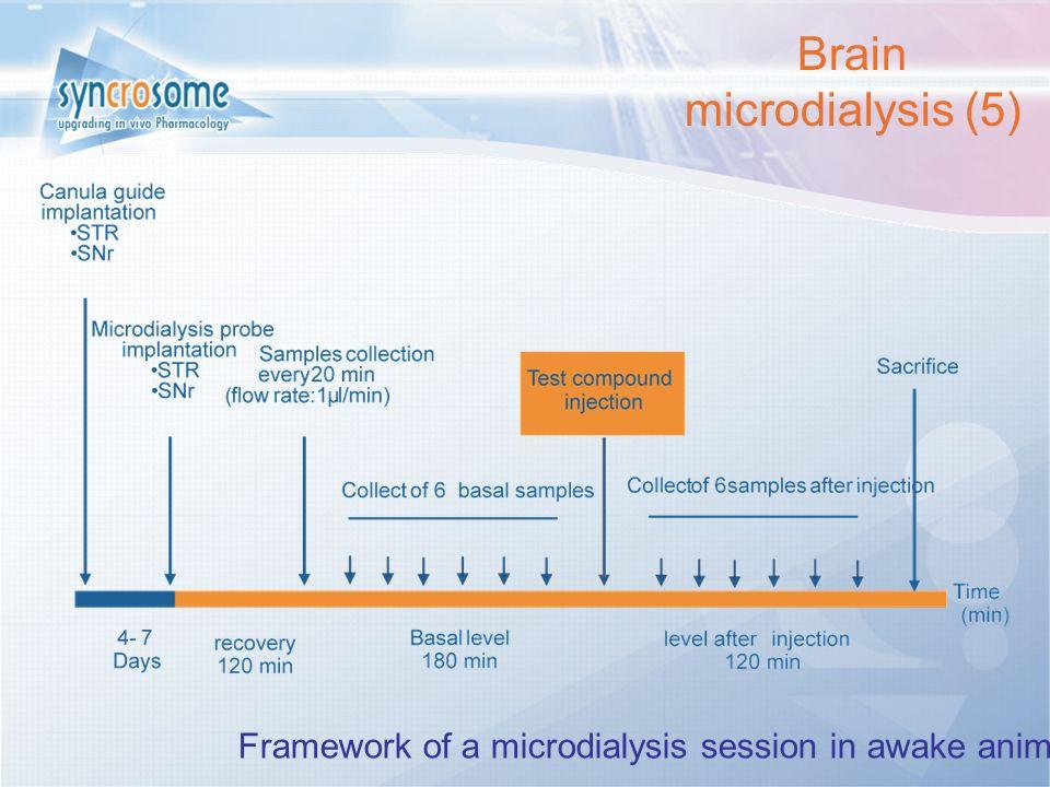 Cliquez et modifiez le titre Cliquez pour modifier les styles du texte du masque Deuxième niveau Troisième niveau Quatrième niveau Cinquième niveau 7 Framework of a microdialysis session in awake animal Brain microdialysis (5)