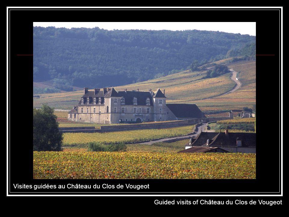 Visites guidées au Château du Clos de Vougeot Guided visits of Château du Clos de Vougeot