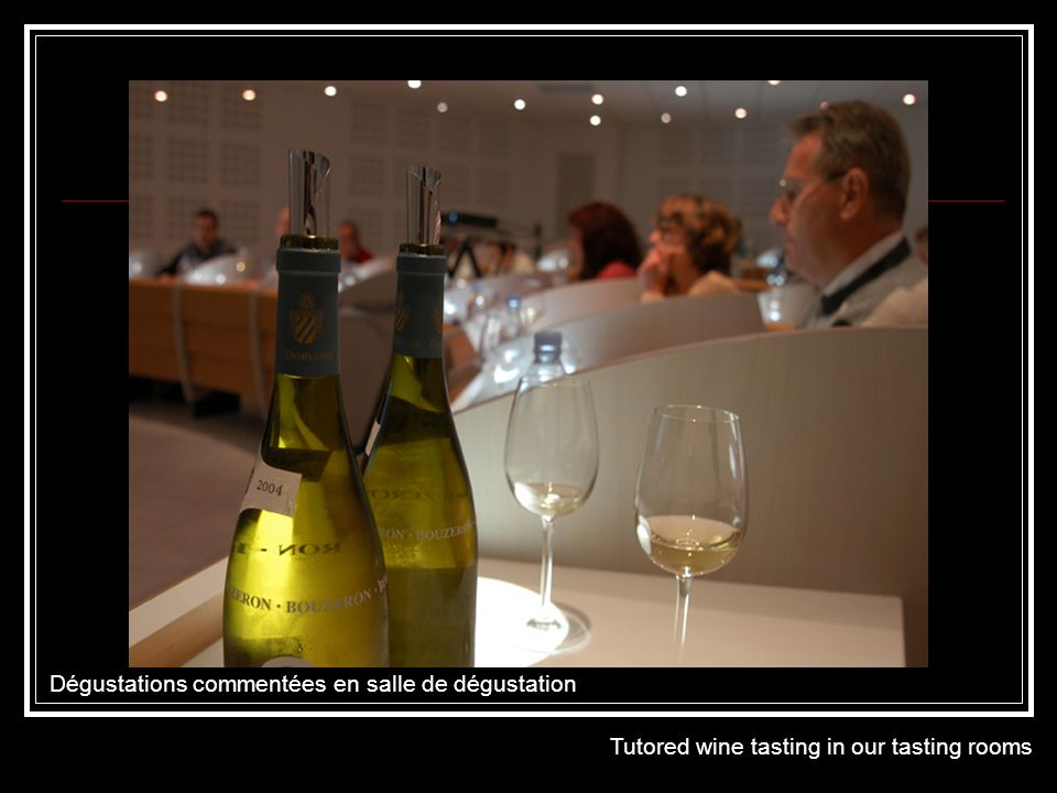 Dégustations commentées en salle de dégustation Tutored wine tasting in our tasting rooms