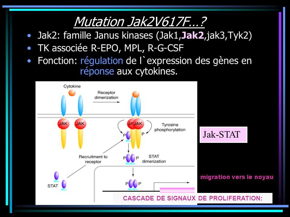 Mutation Jak2V617F Gène cloné 1989: 9p24 Mutation JH2 Substitution G……T nt 1849 Changement Val…..Phe au codon 617 Jak2 V617F Mutation acquise, unique,clonale CSH: cellules myéloïdes (PN, EB, pqt) Absente des Ly T Jak2 muté: pas d`inhibition par le domaine JH2 activité kinase constitutivement active, indépendante de la fixation du ligand sur son récepteur….activation signaux en aval.