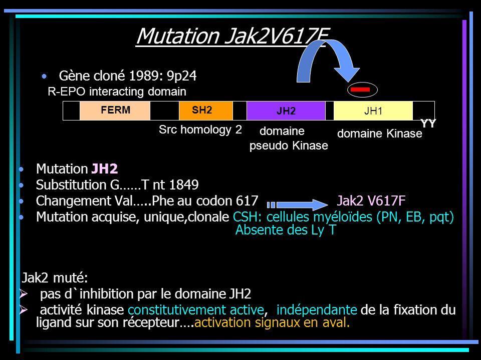 Mutation Jak2V617F Gène cloné 1989: 9p24 Mutation JH2 Substitution G……T nt 1849 Changement Val…..Phe au codon 617 Jak2 V617F Mutation acquise, unique,
