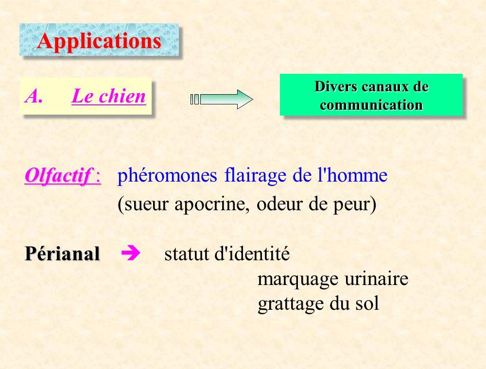 ApplicationsApplications A.Le chien Divers canaux de communication Olfactif : Olfactif : phéromones flairage de l'homme (sueur apocrine, odeur de peur