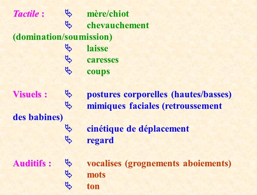 Tactile : Tactile : mère/chiot chevauchement (domination/soumission) laisse caresses coups Visuels : Visuels : postures corporelles (hautes/basses) mi