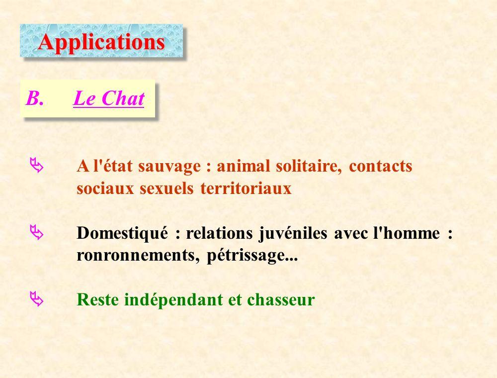 ApplicationsApplications B.Le Chat A l'état sauvage : animal solitaire, contacts sociaux sexuels territoriaux Domestiqué : relations juvéniles avec l'
