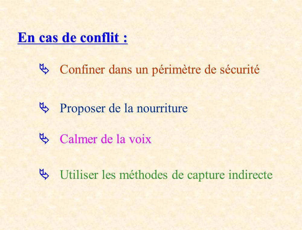 En cas de conflit : Confiner dans un périmètre de sécurité Proposer de la nourriture Calmer de la voix Utiliser les méthodes de capture indirecte