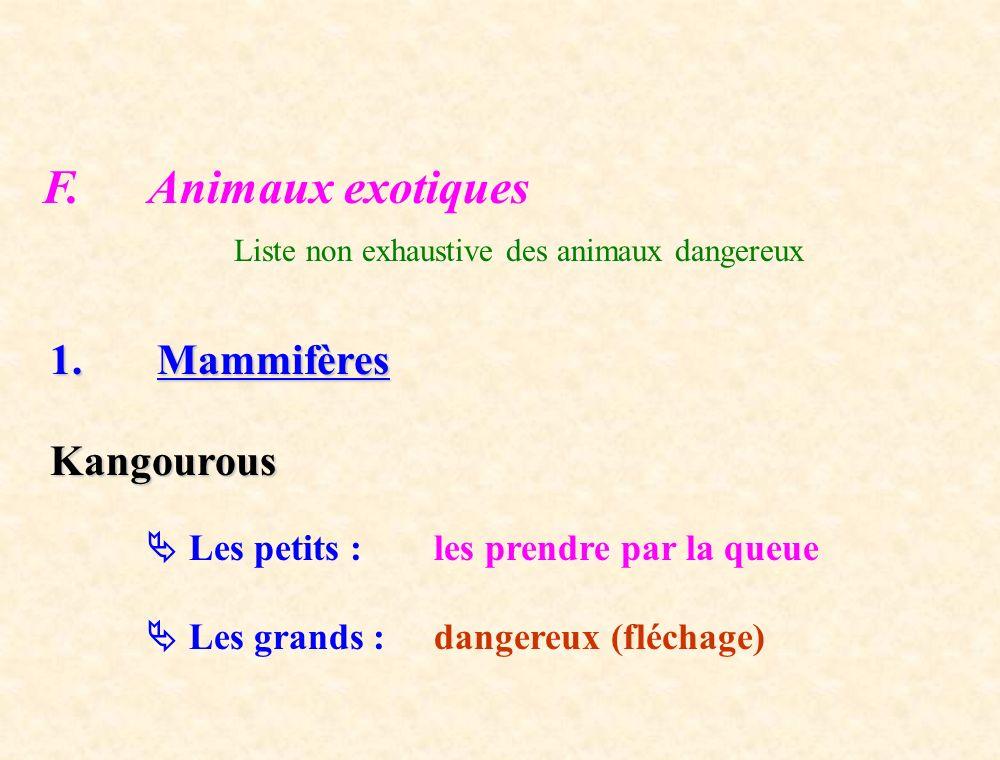 F. Animaux exotiques Liste non exhaustive des animaux dangereux 1. Mammifères Kangourous Les petits : les prendre par la queue Les grands : dangereux