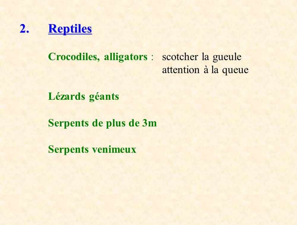 2. Reptiles Crocodiles, alligators :scotcher la gueule attention à la queue Lézards géants Serpents de plus de 3m Serpents venimeux