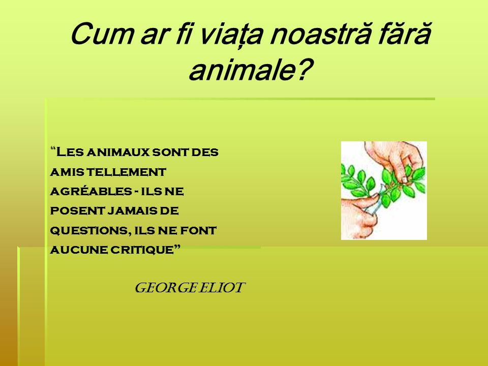 Cum ar fi viaţa noastră fără animale? Les animaux sont des amis tellement agréables - ils ne posent jamais de questions, ils ne font aucune critique G