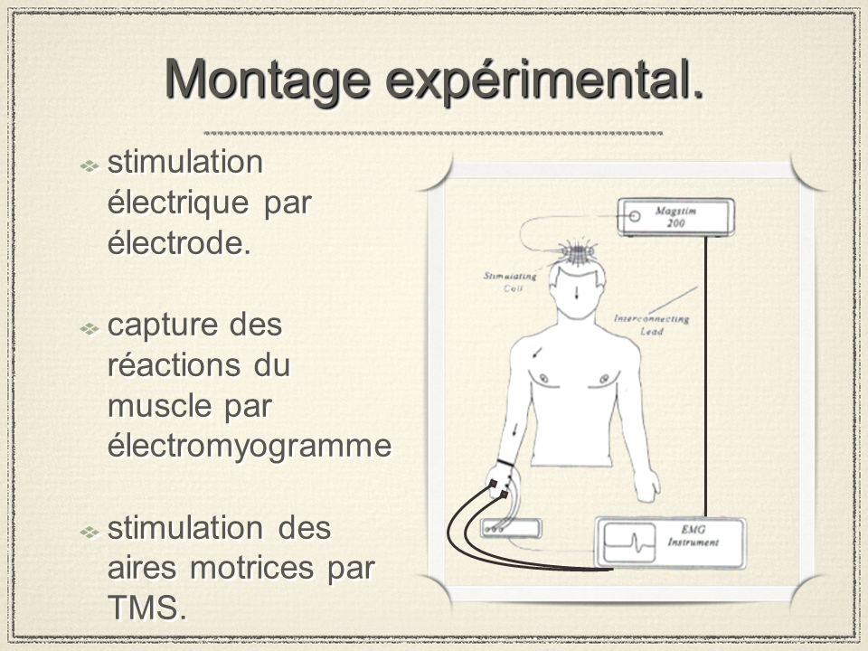 Montage expérimental. stimulation électrique par électrode.