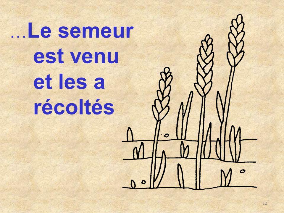 12 … Le semeur est venu et les a récoltés