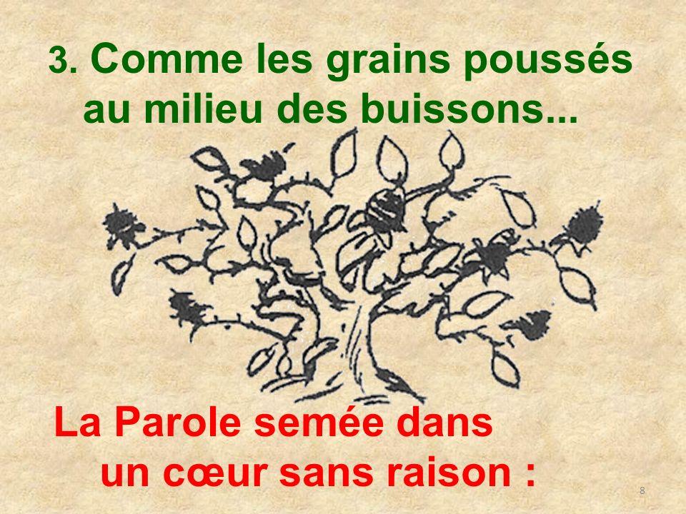 8 3. Comme les grains poussés au milieu des buissons... La Parole semée dans un cœur sans raison :