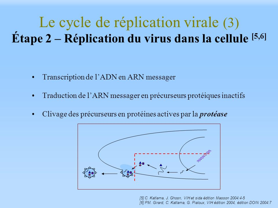 Le cycle de réplication virale (3) Étape 2 – Réplication du virus dans la cellule [5,6] Transcription de lADN en ARN messager Traduction de lARN messa