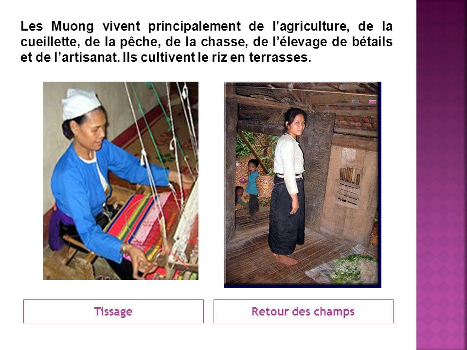 TissageRetour des champs Les Muong vivent principalement de lagriculture, de la cueillette, de la pêche, de la chasse, de lélevage de bétails et de la