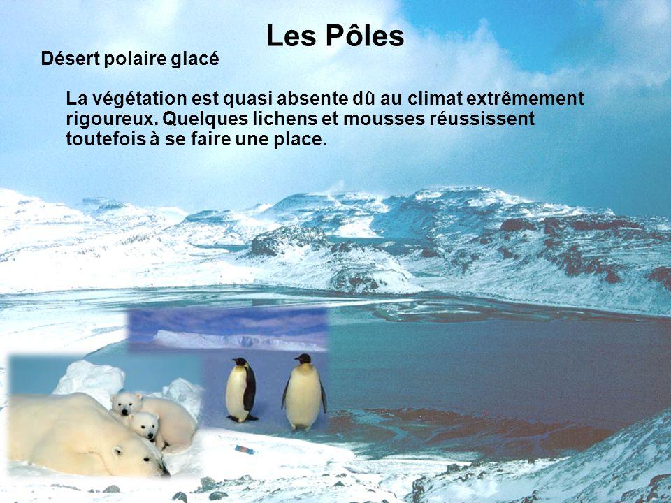 Les Pôles Désert polaire glacé La végétation est quasi absente dû au climat extrêmement rigoureux. Quelques lichens et mousses réussissent toutefois à