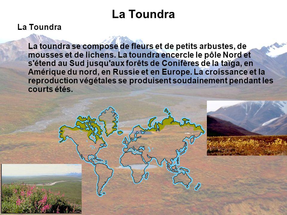 La Toundra La toundra se compose de fleurs et de petits arbustes, de mousses et de lichens. La toundra encercle le pôle Nord et s'étend au Sud jusqu'a