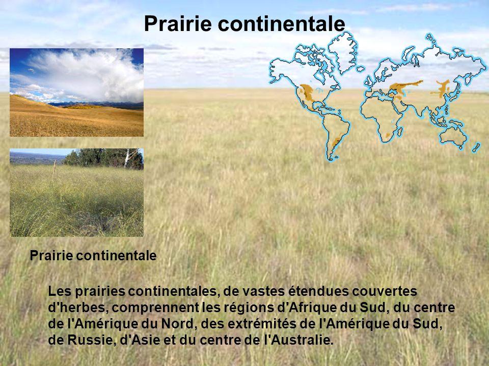 Prairie continentale Les prairies continentales, de vastes étendues couvertes d'herbes, comprennent les régions d'Afrique du Sud, du centre de l'Améri