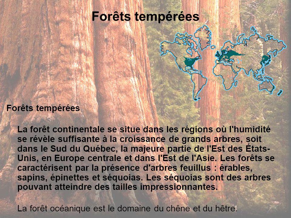 Forêts tempérées La forêt continentale se situe dans les régions où l'humidité se révèle suffisante à la croissance de grands arbres, soit dans le Sud