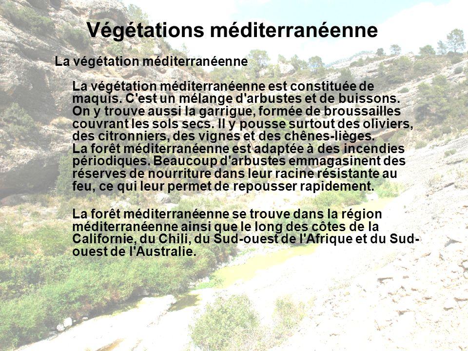 Végétations méditerranéenne La végétation méditerranéenne La végétation méditerranéenne est constituée de maquis. C'est un mélange d'arbustes et de bu