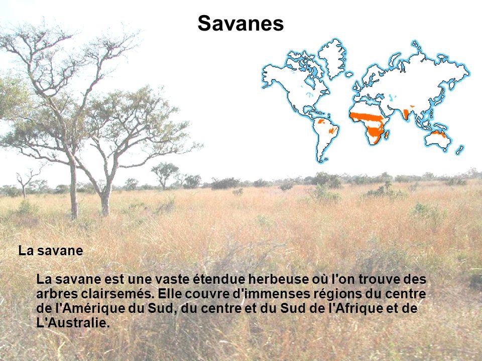 Savanes La savane La savane est une vaste étendue herbeuse où l'on trouve des arbres clairsemés. Elle couvre d'immenses régions du centre de l'Amériqu