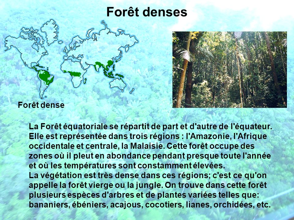 Forêt denses Forêt dense La Forêt équatoriale se répartit de part et d'autre de l'équateur. Elle est représentée dans trois régions : l'Amazonie, l'Af