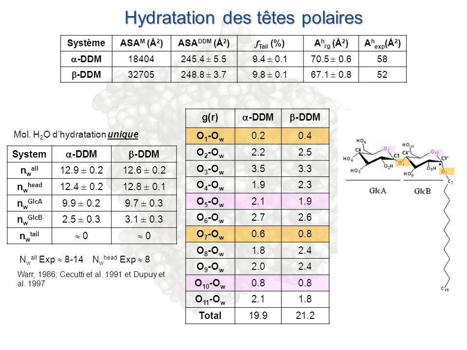 Hydratation des têtes polaires g(r) -DDM O 1 -O w 0.20.4 O 2 -O w 2.22.5 O 3 -O w 3.53.3 O 4 -O w 1.92.3 O 5 -O w 2.11.9 O 6 -O w 2.72.6 O 7 -O w 0.60