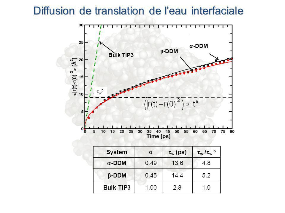 Diffusion de translation de leau interfaciale Bulk TIP3 -DDM β -DDM Systemα w (ps) w / w b -DDM 0.4913.64.8 -DDM 0.4514.45.2 Bulk TIP31.002.81.0 w b
