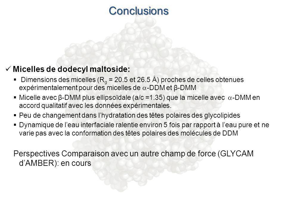 Conclusions Micelles de dodecyl maltoside: Dimensions des micelles (R g = 20.5 et 26.5 Å) proches de celles obtenues expérimentalement pour des micell