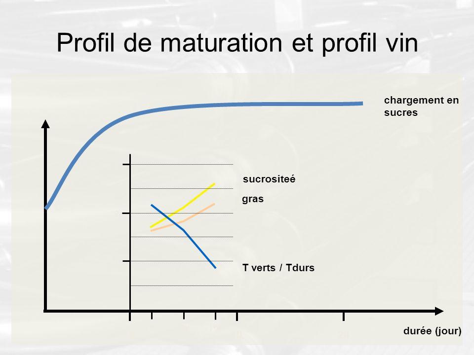Profil de maturation et profil vin chargement en sucres 200 durée (jour) 10 j+xj+yj+z 1 3 2 sucrositeé T verts / Tdurs gras