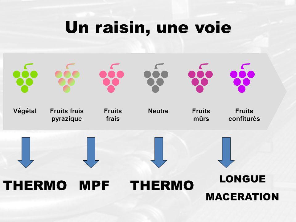 Un raisin, une voie VégétalFruits frais pyrazique Fruits mûrs NeutreFruits confiturés Fruits frais MPF LONGUE MACERATION THERMO