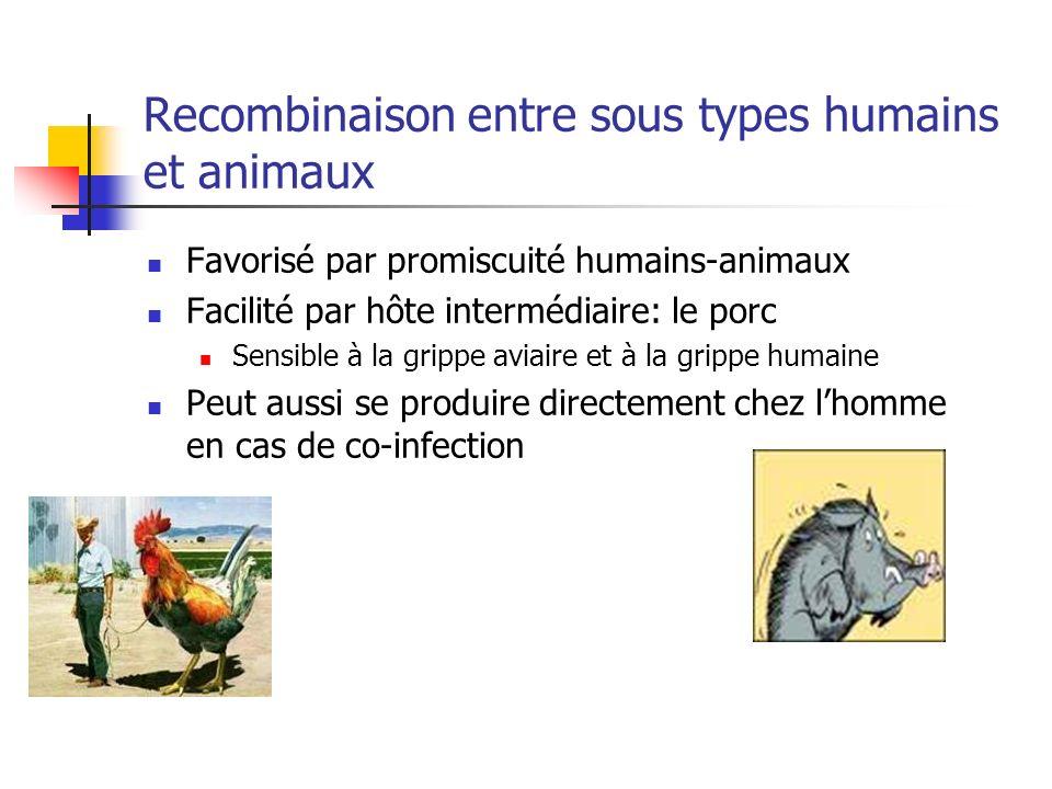 Recombinaison entre sous types humains et animaux Favorisé par promiscuité humains-animaux Facilité par hôte intermédiaire: le porc Sensible à la grip