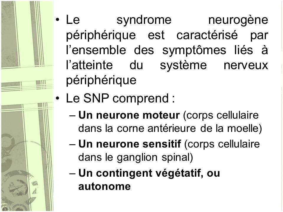 Le syndrome neurogène périphérique est caractérisé par lensemble des symptômes liés à latteinte du système nerveux périphérique Le SNP comprend : –Un
