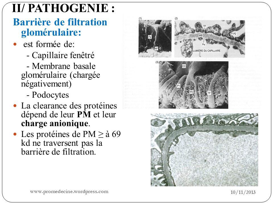 II/ PATHOGENIE : Barrière de filtration glomérulaire: est formée de: - Capillaire fenêtré - Membrane basale glomérulaire (chargée négativement) - Podo