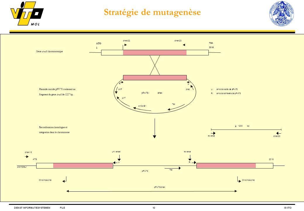 DIENST INFORMATIESYSTEMENFILE10 VITO U :amorce sens de pPw78 R :amorce antisens de pPw78 plac Tet oriColE1 oriT oriF pPw78::dnak TGA 2016 dnak23 pPw78
