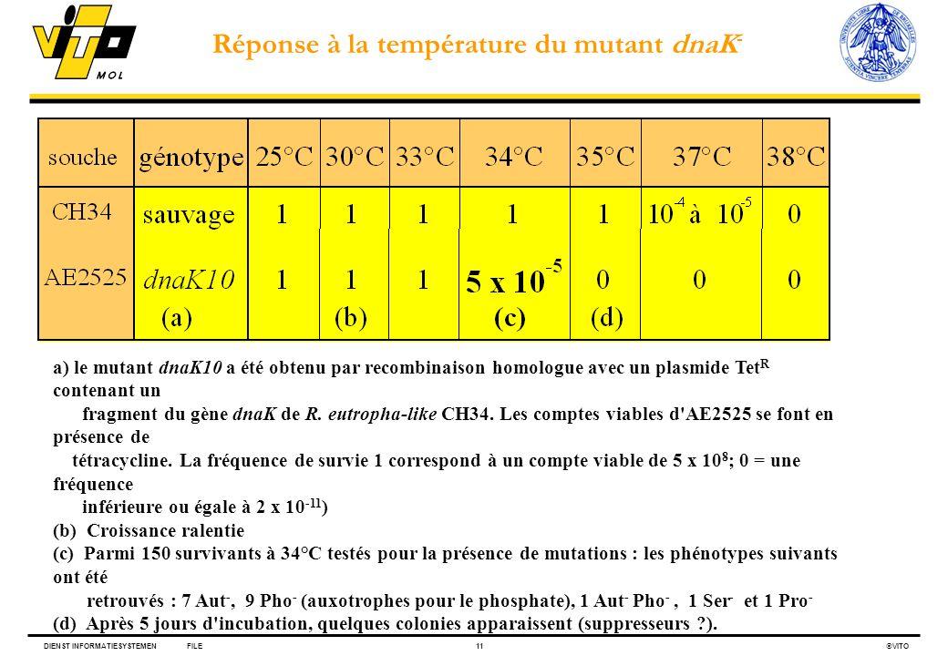 DIENST INFORMATIESYSTEMENFILE11 VITO a) le mutant dnaK10 a été obtenu par recombinaison homologue avec un plasmide Tet R contenant un fragment du gène