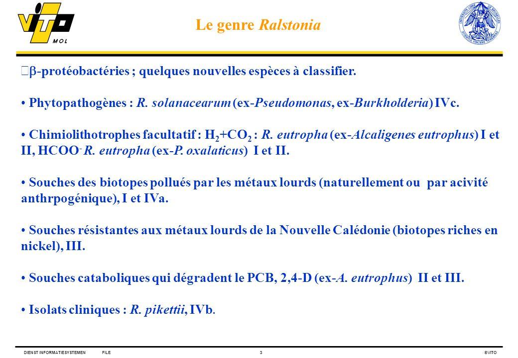 DIENST INFORMATIESYSTEMENFILE3 VITO -protéobactéries ; quelques nouvelles espèces à classifier. Phytopathogènes : R. solanacearum (ex-Pseudomonas, ex-