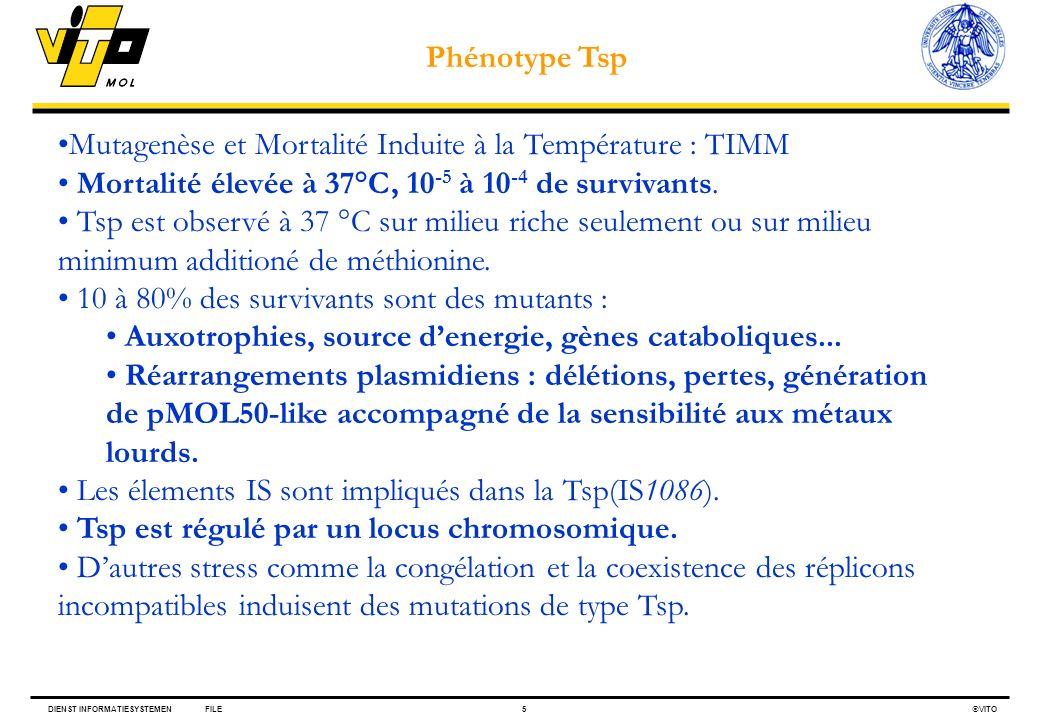 DIENST INFORMATIESYSTEMENFILE5 VITO Mutagenèse et Mortalité Induite à la Température : TIMM Mortalité élevée à 37°C, 10 -5 à 10 -4 de survivants. Tsp
