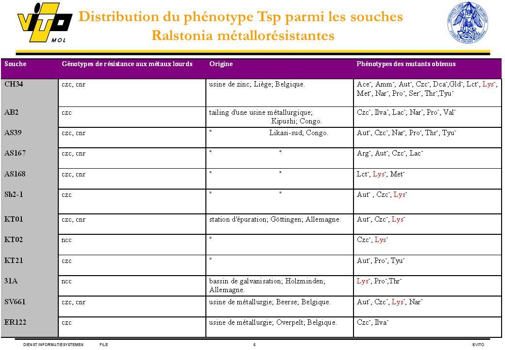 DIENST INFORMATIESYSTEMENFILE6 VITO Distribution du phénotype Tsp parmi les souches Ralstonia métallorésistantes