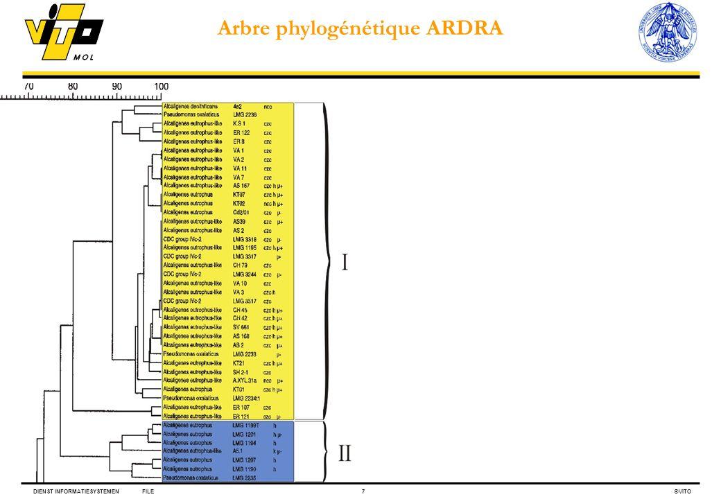DIENST INFORMATIESYSTEMENFILE7 VITO Arbre phylogénétique ARDRA